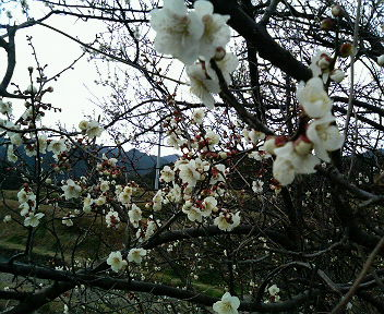 梅は咲いた